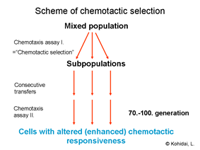 Chemotactic selection
