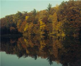 Trees in autumn colors reflected in a smooth lake