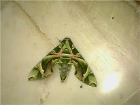 Colourful Moth.jpg