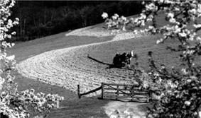 A black-and-white photograph of a single horse-drawn plow in a field on a hillside.
