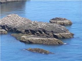 A low-lying skerry made of dark rocks and covered with seabird droppings sits in a blue sea.