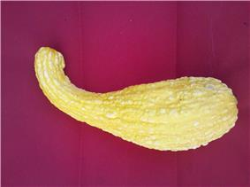 Yellow curved squash