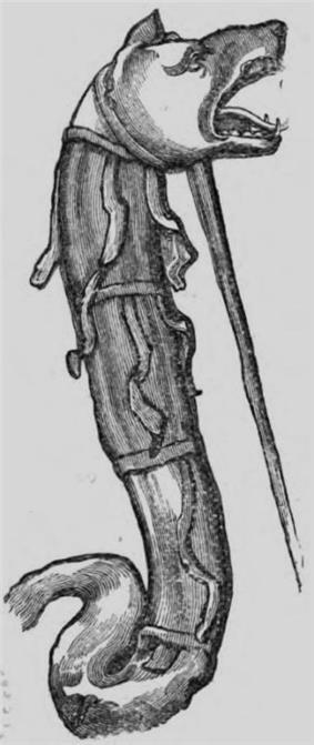 Dacian Draco