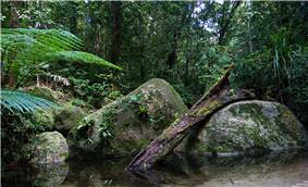 Dense rainforest scene, with a small pool surrounded by ferns and moss-laden rocks