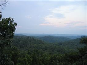 The forest viewed from Tater Knob.