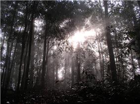 Sunlight shining through the trees in Borneo