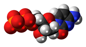 Space-filling model of the deoxycytidine diphosphate molecule as an anion (3- charge)