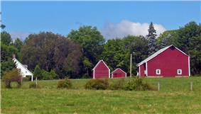 Dill Farm