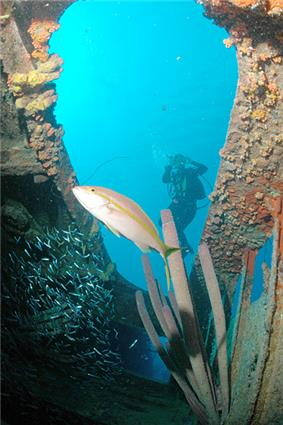 Divers on the Hilma Hooker