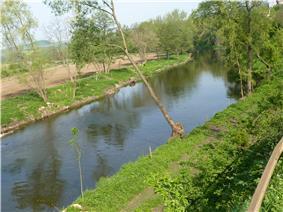 Jihlava near Dolní Kounice