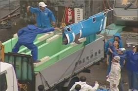 A dolphin in a sling being lowered by staff into one of two dolphin tubs on back of a truck.