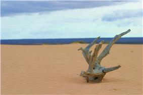 Sandy ground fronting a strip of blue water on the horizon, with a piece of dead wood in foreground