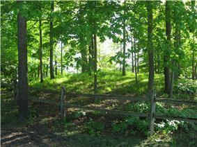 Dunns Pond Mound