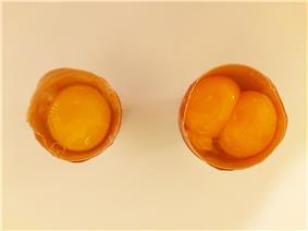 Egg and maxi egg 2.jpg