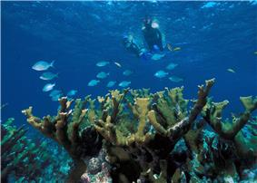 Underwater view of snorkelers, fish and coral