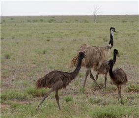 Male with older juveniles