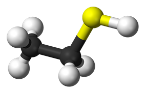 Ball-and-stick model of the ethanethiol molecule
