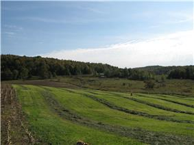 Countryside in Fairfield