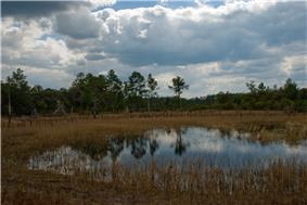 A pond in Farles Prairie.