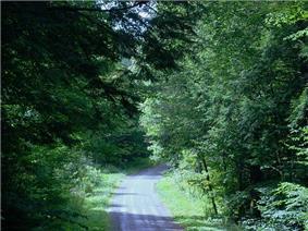McCollum Road in Farmington Township