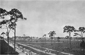 A field recently excavated and cleared with a few slash pine trees, and recently dug canals and new dirt roads; some structures also dot the background