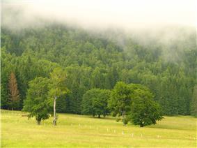 Landscape around Lake Sfânta Ana, southern Harghita County