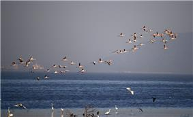 Flamingoes Sewri.jpg