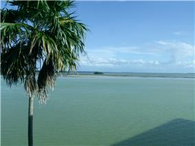 A color photograph of the greenish blue water of Florida Bay, featuring a large Sabal palm to the left and a mangrove island in the distance