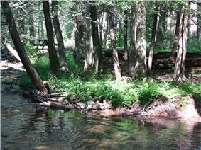 A stream flows in front of a bank with many trees and a picnic table