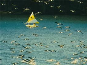 A flock of Canadian geese flying in front of a yellow sailboat with a yellow and white sail on a blue lake