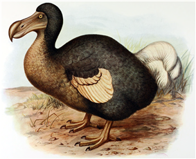 Painting of a dodo