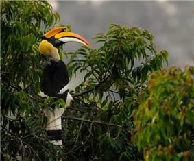 A large brightly-colored bird perched in a tree