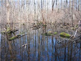 Great Swamp National Wildlife Refuge New Jersey02.jpg