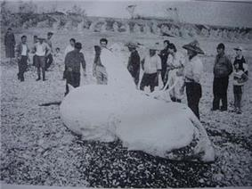 Photo of large shark on shore surrounded by people