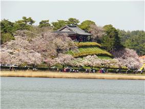 Cherry blossoms along Gyeongpo Lake.