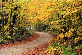 Trees in fall along a road near the Hapgood Pond Recreation Area.