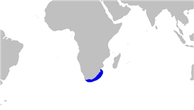 Partial world map with a blue outline along the coast of South Africa