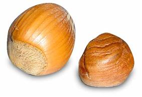 Two round nuts, one with its shell and one without, yellow to light brown in color.