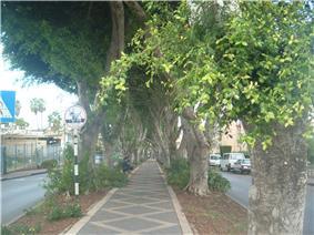HaTzionut Boulevard