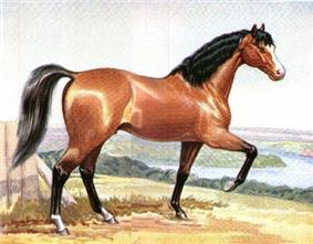 Painting of a red colored horse with black mane and tail prancing