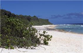 Parallel view down a sandy beach backed by shrub-covered cliffs, with a large shrub in the foreground and the ocean to the right