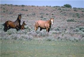 Two horses in a field. The one on the left is a dark brown with black mane and tail. The one on the right is a light red all over.