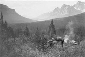 Black and white photograph of pack horses and a camp in the Howse Pass in 1902