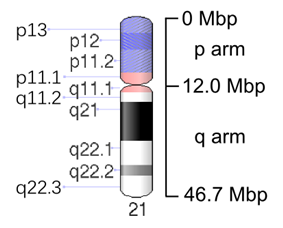Map of Chromosome 21