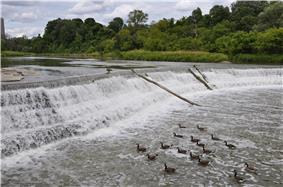 Water flows over a low dam over a river; one tree-lined bank of the river is visible.