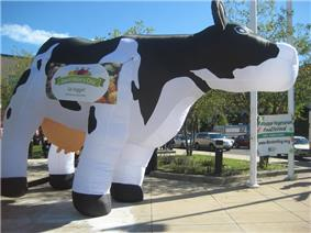 Inflatable Cow.jpg