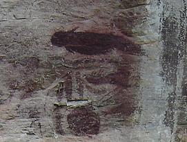 Cave painting that has a shape resembling a dugong