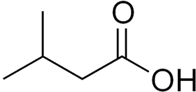 Skeletal formula of 3-methylbutanoic acid