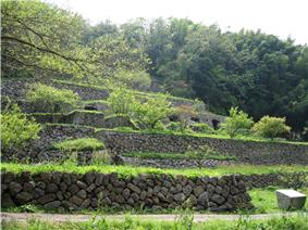 Ruins of terraces built on a hillside.