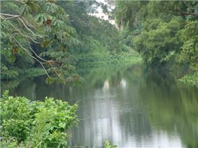A small calm river curves between banks covered in dense green foliage.